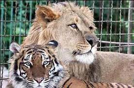 عکس, تعبیر خواب باغ وحش هرج و مرج است