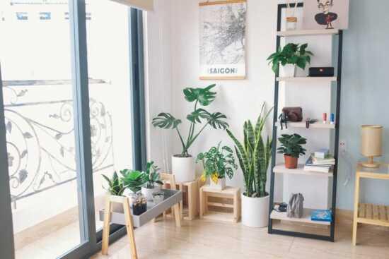 عکس, شته سفید یا کپک سفید گیاه علائم و درمان