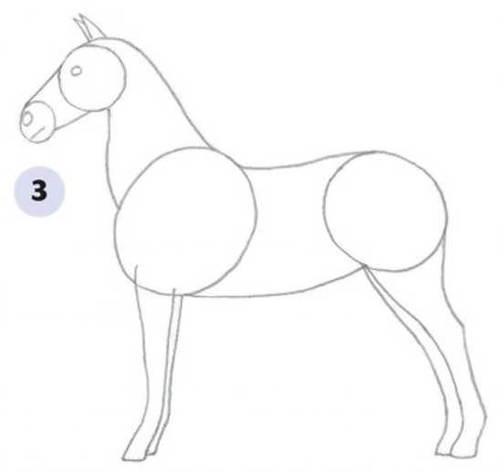 عکس, آموزش کشیدن اسب برای بچه ها به صورت عکس دار