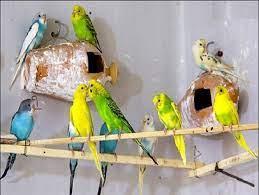 عکس, اگر می خواهید پرنده پرورش دهید بخوانید