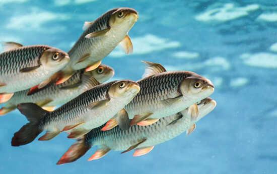 عکس, مقاله استاندارهای آب برای پروش ماهی