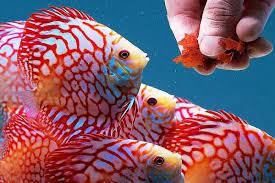 عکس, از سیر تا پیاز نگهداری از ماهیان زینتی