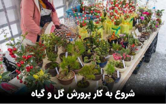 عکس, کدام گل ها را با هدف فروش پرورش دهیم و میزان در آمد