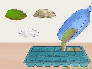 عکس, آموزش قدم به قدم برای کاشتن بذر گل