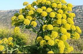 عکس, معرفی پرسودترین گیاه برای پرورش و رسیدن به پول
