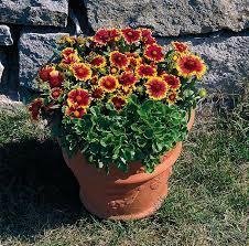 عکس, پرورش گل وحشی و زیبای رعنا
