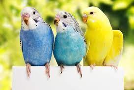 عکس, پرورش کدام پرنده بازار کار بهتری دارد