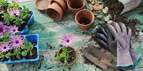عکس, کاشت در گل در گلدان برای مبتدی