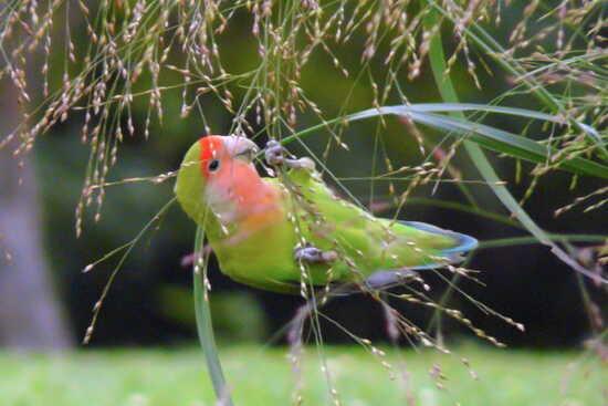عکس, راه های شاد کردن پرنده خانگی را بیاموز