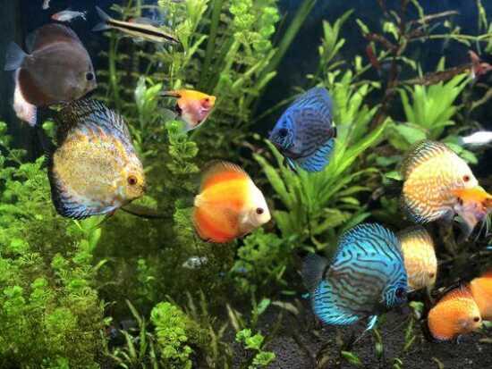 عکس, برای پروش ماهی های زینتی چقدر پول اولیه کافی است